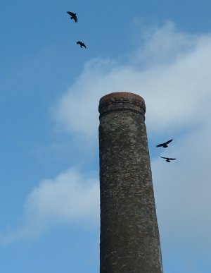 Crows at the chimney